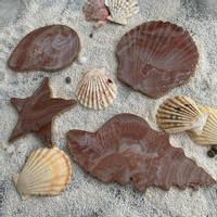 Brown-Resin-Shell-Coaster-Set-by-Luna-Art-Resin Thumbnail